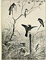 Birds of village and field- a bird book for beginners (1898) (14568708869).jpg