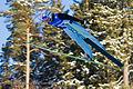 Bjørn Einar Romøren World Cup Ski flying Vikersund 2011.jpg