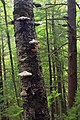 Black Forest Trail (Revisited) (19) (21199674825).jpg