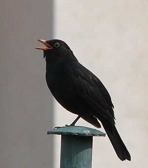 Bird_sound