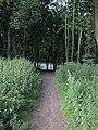 Bluebell Wood - panoramio.jpg