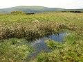 Boggy pond on Shiel Dod - geograph.org.uk - 462392.jpg