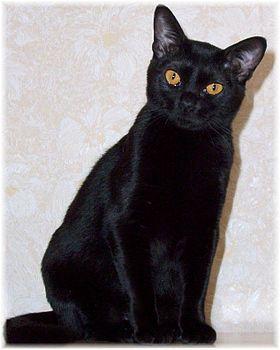 Noir chatte à gogo
