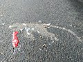 Bonnet macaque roadkill IMG20170921100142.jpg