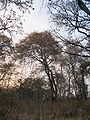 Bosque Seco.JPG