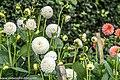 Botanic Gardens In Glasnevin (Dublin) (7951846024).jpg