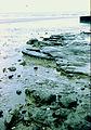 Boulder clay outcrop on beach - geograph.org.uk - 244084.jpg