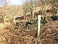 Boundary wall of Storth Wood, Elland - geograph.org.uk - 703884.jpg