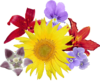 Bouquet fleurs.png
