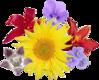 Bestand bosje wikipedia for Bouquet de fleurs wiki