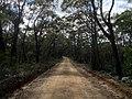 Braeside Trail - panoramio (4).jpg