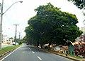 Bragança Paulista - São Paulo, Brasil - panoramio (28).jpg