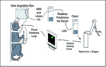 Design of an experiment in which brain activity from a monkey was used to control a robotic arm. Brain-computer interface (schematic).jpg
