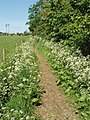 Bridleway from Wootton to North Hinksey - geograph.org.uk - 442921.jpg