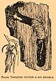 Brockhaus and Efron Encyclopedic Dictionary b68 949-1.jpg