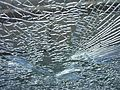 Broken-Window-20130513.jpg