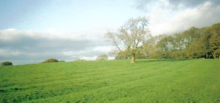Rig and furrow marks at Buchans Field, Wester Kittochside, an area of Scottish common land Buchansrigs.jpg