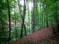 Bukova šuma - panoramio (1).jpg