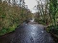Bushy Park, Dublin -146465 (32605672608).jpg