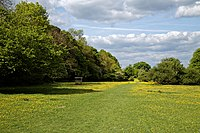 Buttercup sward and grass path in Hatfield Forest Essex England 1.jpg