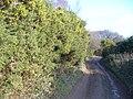 Byway on Hackhurst Downs - geograph.org.uk - 668270.jpg