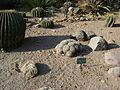 Cadereyta Botanical garden (5760887705).jpg