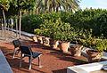 Cadires i tarongers en testos, jardí de les Hespèrides, València.JPG