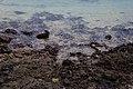 Cala en Puerto Naos.jpg