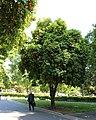 California State Capitol Park 11.jpg
