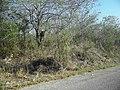 Calotmul (Yaxkukul), Yucatán (18).jpg