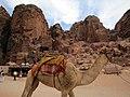 Camel in Petra, Jordan - October 2009 (4053080521).jpg
