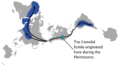 Camelid migration & evolution DymaxionMap 01.png