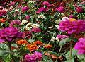 Campo de Flores.JPG