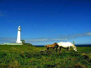 Cape Shiriya and Kandachime horses.jpg