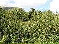 Carrownoona Townland - geograph.org.uk - 1482556.jpg