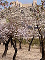 Castalla and blooming almonds.JPG
