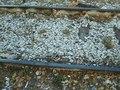 File:Catanzaro Lido train station (FS) 567.webm