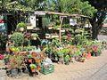 Catarina Tienda de Plantas.jpg