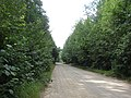Ceļš pie Andrupenes, Andrupenes pagasts, Dagdas novads, Latvia - panoramio.jpg