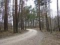 Celiņš, Tēraudi, Salaspils pagasts, Salaspils novads, Latvia - panoramio.jpg
