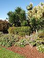 Centennial park in Sydney (10).jpg
