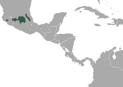 Central Mexican Broad-clawed Shrew area.png