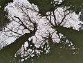 Chêne en hiver.jpg