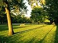 ChicagoTrees.jpg