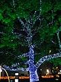 Christmas tree lights, Peace Boulevard (407049265).jpg