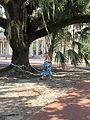 City Park New Orleans 24 Sept 2016 Great Lawn 27.jpg