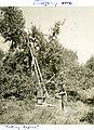 "Civilian Public Service -24, Hagerstown, Maryland, ""Emergency work - picking apples"" (8201479400).jpg"