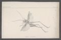 Cleora - Print - Iconographia Zoologica - Special Collections University of Amsterdam - UBAINV0274 059 05 0002.tif