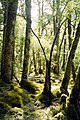 Clinton Valley Track on Milford Track, New Zealand - panoramio.jpg