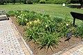 Coastal Georgia Botanical Gardens, Daylily Garden 2.jpg